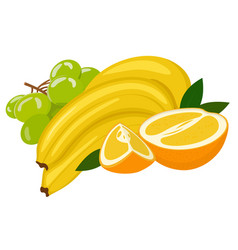 composition from various fresh exotic fruit orange vector image