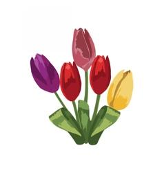 Tulip flowers bouquet vector