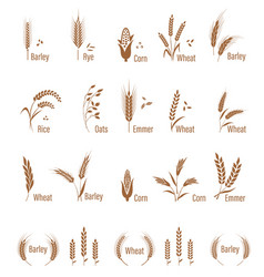 agricultural symbols isolated on white background vector image