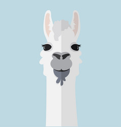 Alpaca lama portrait flat vector