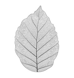 Botanical series elegant single exotic leaf vector