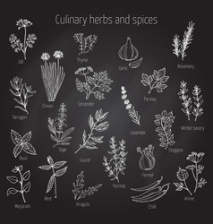 set of culinary herbs and spices vector image