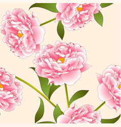 pink peony flower on beige ivory background vector image