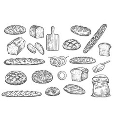 Bread loafs bakery buns and baguettes vector