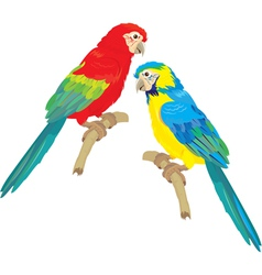 Blue Yellow and Red Blue Macaw parrots vector image vector image