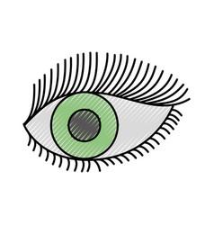 beautiful female eye wide open with eyebrow and vector image