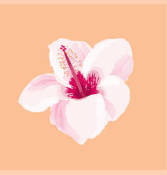 Hibiscus flower tropical exotic vector