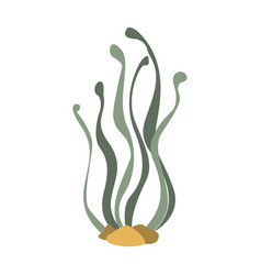 Seaweed attached to the bottom part of vector