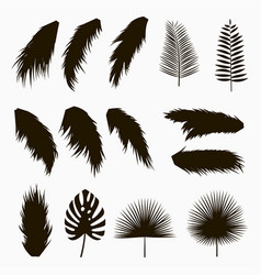 silhouettes of tropical and palm leaves vector image