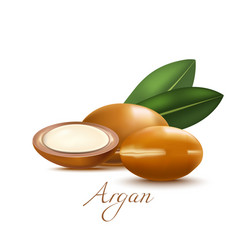 Argan nuts and leaves in realistic style vector