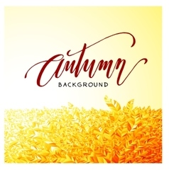 Autumn lettering on orange leaves background vector image