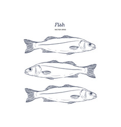 hand drawn of fish vector image