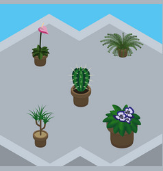 Isometric flower set of grower houseplant peyote vector