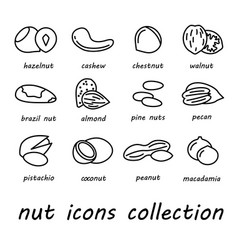 nut icons collection vector image