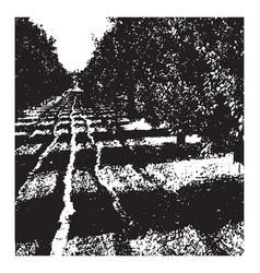 orange grove vintage vector image