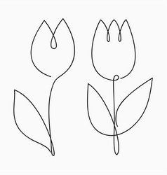 tulip one line drawing continuous line flower vector image