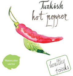 watercolor turkish hot pepper vector image