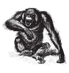 Orangutan vintage vector