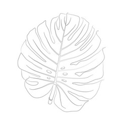 contour of monstera vector image