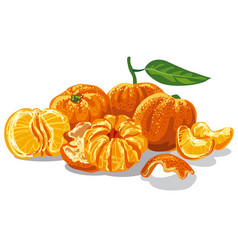 Fresh juicy mandarines vector