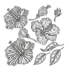 Hand drawn tropical flowers vintage floral set vector