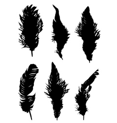 The collection of feathers vector