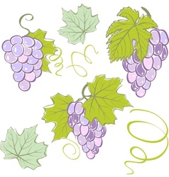 creative grapes set elements vector illustration vector image vector image