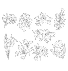 Flower Collection Hand Drawn vector image vector image