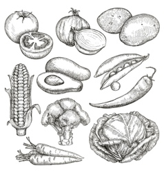 Vegetables sketches hand drawing set vector image vector image