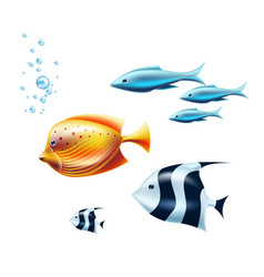 black white tropical fish coral reef fish vector image