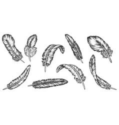 feather sketch set isolated vintage bird vector image