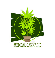 marijuana plant green line symbols on white vector image
