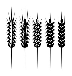 set of monochrome spikelets for scenery vector image