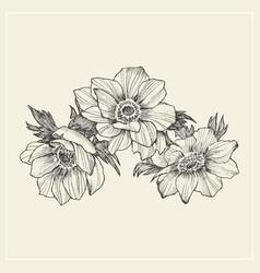 vintage anemone set hand drawn vector image