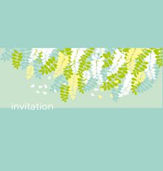 acacia spring blossom flower design element vector image