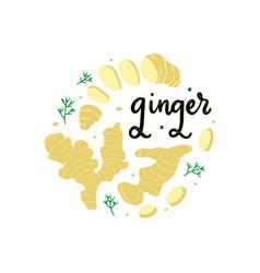 Fresh ripe ginger flat vector