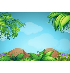Scene with rocks and vine vector image