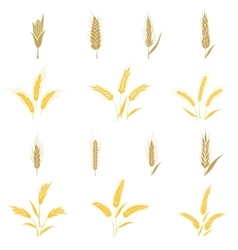 Wheat ears and seed vector image