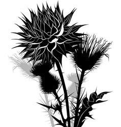 thistle vector image vector image