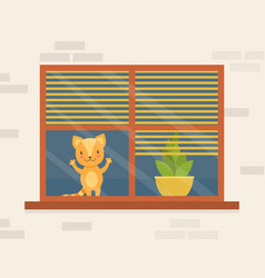 cute funny cat sitting on window and looking vector image