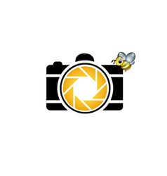 photography logo with cute honeybee vector image