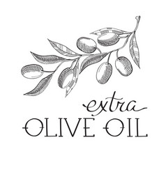 Stem of olive decorative sketch vector