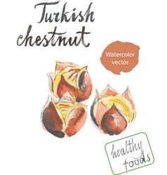 Watercolor roasted chestnuts vector