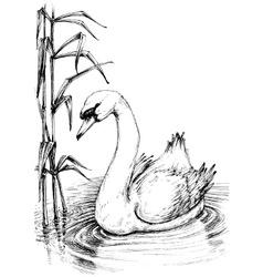 Swan on lake sketch vector image vector image