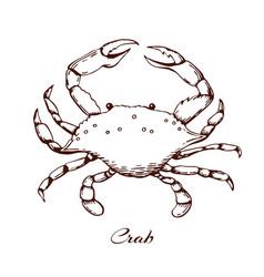 blue crab seafood design element sea vector image