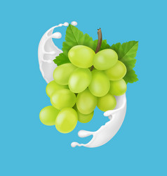 Green grape branch in yogurt or milk splash vector