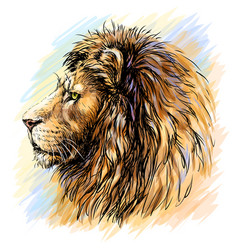 lion sketchy graphical color profile portrait vector image