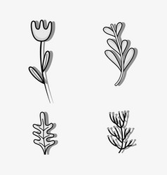 set ructic plants leaves and natural flower vector image