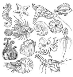 set with hand drawn marine life vector image
