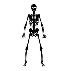 silhouette black human skeleton on white backgroun vector image